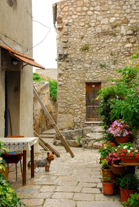Street, with dog, Riardo