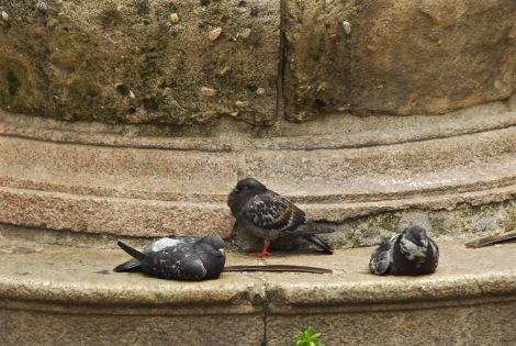 Pigeon Party I, Milan
