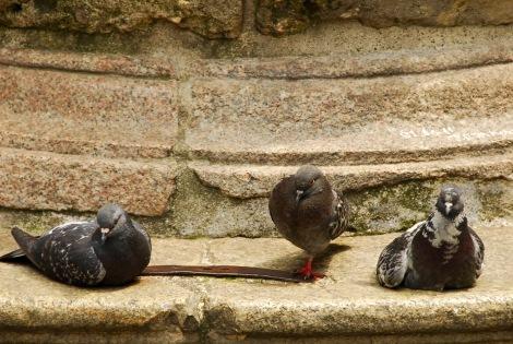 Pigeon Party II, Milan