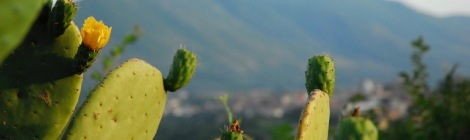 Close-up of a prickly pear cactus with a town and mountains in the background